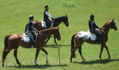 優秀な馬達